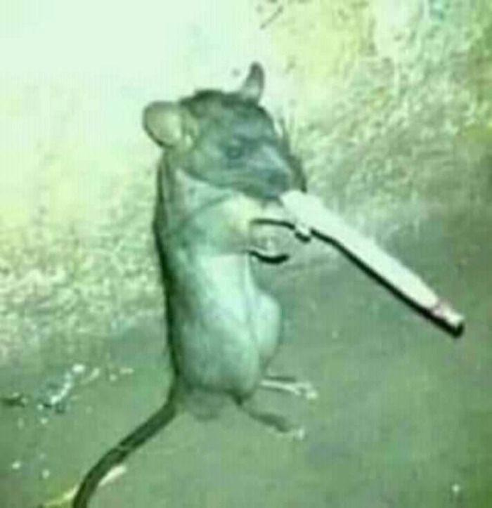 Nesta noite Mulher flagra homem gravando Rato fumando!!! URGENTE!!!!